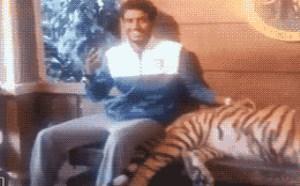 搞笑gif动态图:印度阿三哥与老虎合影爆笑没内涵gif动态图片