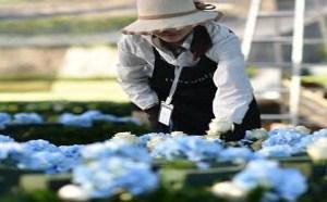 吴奇隆海岛婚礼,打造鲜花玫瑰、永生玫瑰、玫瑰珠宝三大主线系列
