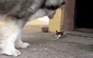 小猫爆笑gif动态图片搞笑动图