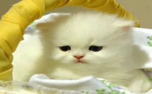猫咪宝贝搞笑gif图片萌宝搞笑动态图