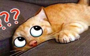 谁说猫咪高冷霸气,犯起二来连自己都害怕!萌星人破事32